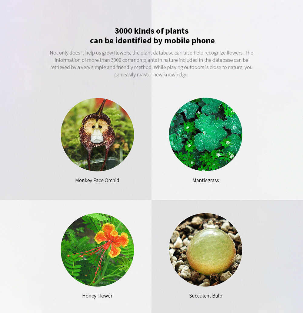 Smart Flora Monitor 3000 kinds of plants can be identified by mobile phone