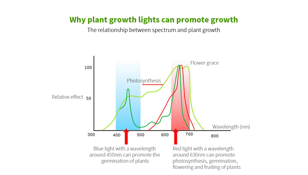LED Plant Growth Light Bulb The relationship between spectrum and plant growth